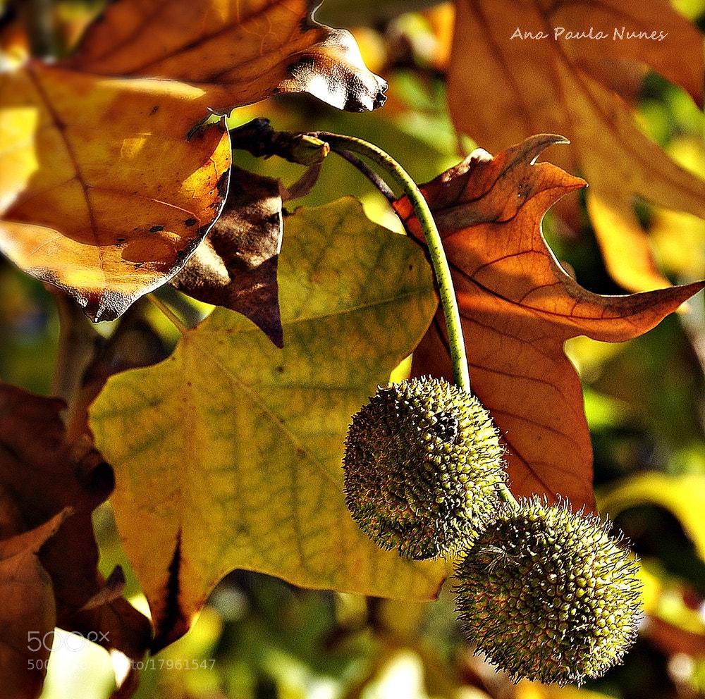 Photograph Cores d'Outono by Anita  Nunes on 500px