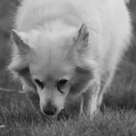 Toby, Canon EOS 7D MARK II, Sigma 150-600mm f/5-6.3 DG OS HSM | S