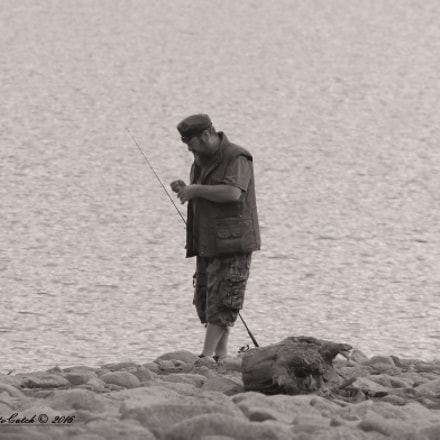 The Fisherman, Canon EOS 7D MARK II, Sigma 150-600mm f/5-6.3 DG OS HSM | S