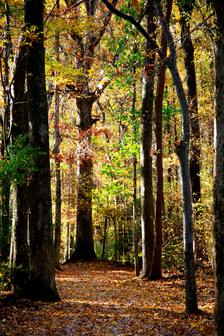 Photograph Beautiful woods by Ann Weis on 500px