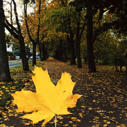 The leaves fall for you