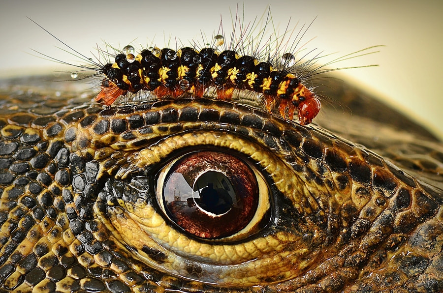 Photograph The Real Eyebrows by anas topbgt on 500px