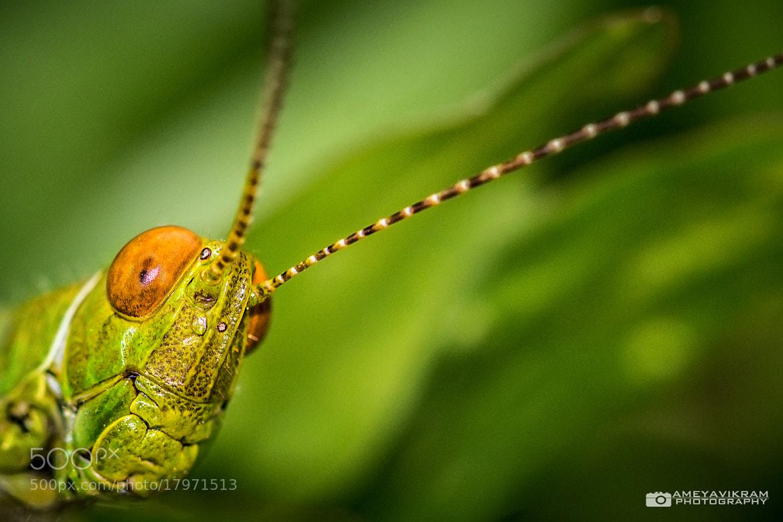 Photograph Grasshopper - HDR by Ameyavikram Mahalingashetty on 500px