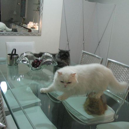 dinner with cats, Canon POWERSHOT A85