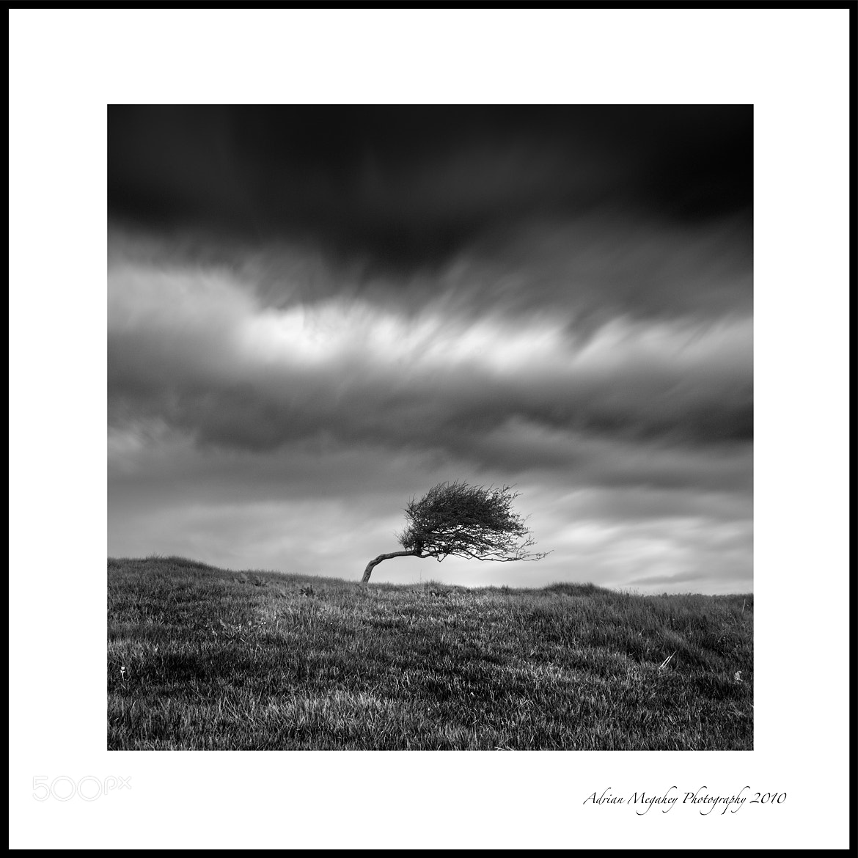 Photograph Tree I by adrian megahey on 500px