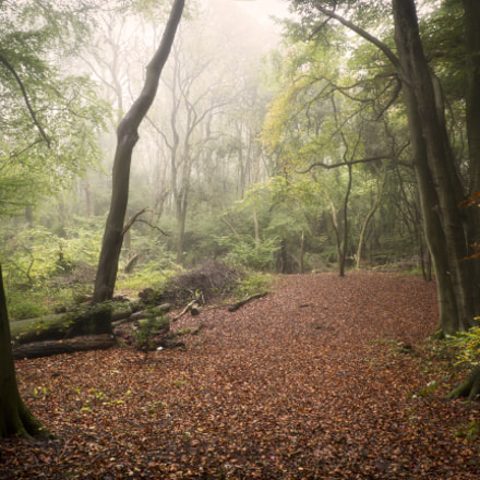 Autumn woods, Canon EOS 60D, Sigma 18-125mm f/3.5-5.6 DC IF ASP