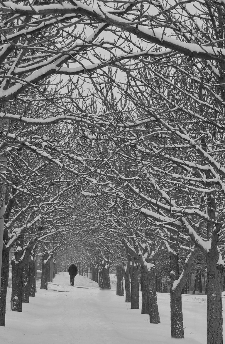 Photograph     ( from 94.6 to 92.5  ?????)  snow by tugba kiper on 500px