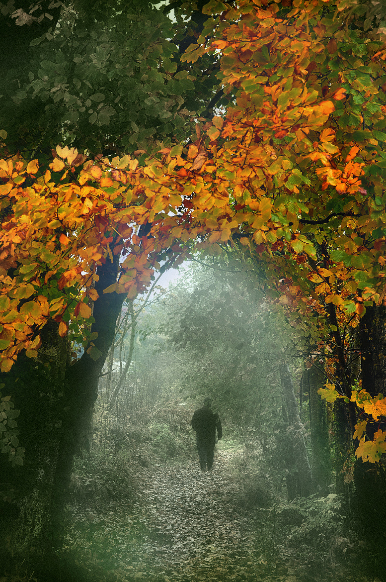 Photograph autumn way by Jozsef Balogh on 500px