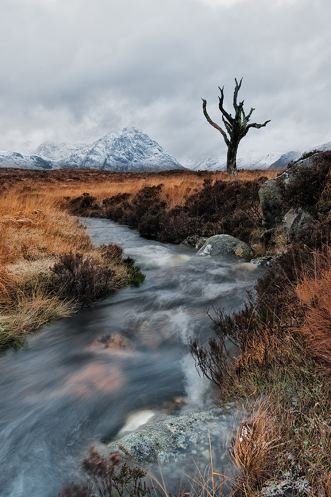 Photograph Beauty in isolation by Neil O'Connell on 500px