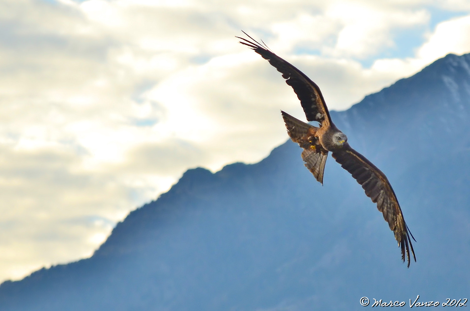 Photograph Flight by Marco Vanzo on 500px