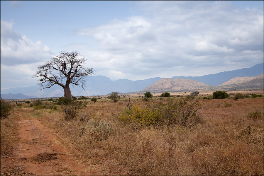 Landscapes of Mkomazi №6