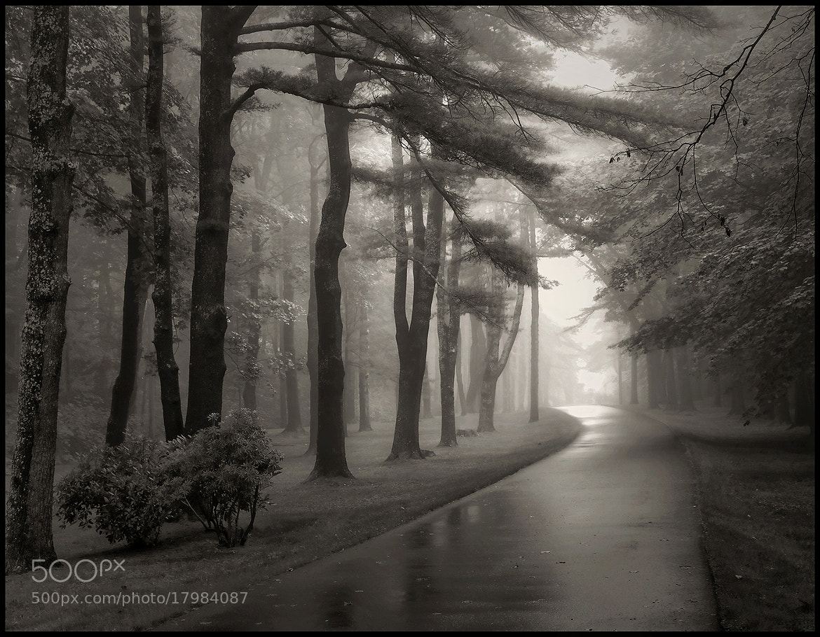 Photograph Fog,Road and Trees by Alan Borror on 500px