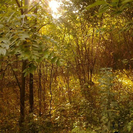 Walk In The Woods, Samsung SGH-T759