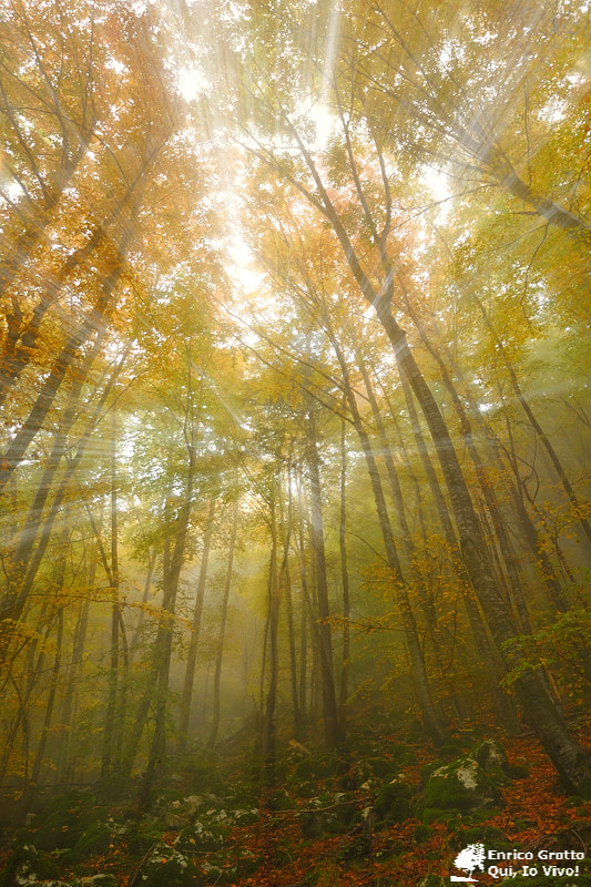 Photograph My Forest | Vicenza by Enrico Grotto on 500px