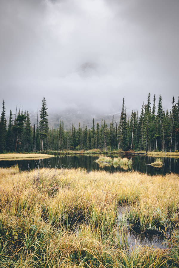 Moody swamp by A Frenchman In NY