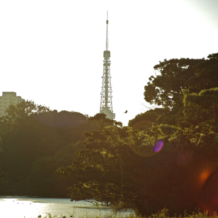 Tokyo tower with sunset, RICOH PENTAX K-1, smc PENTAX-FA 28-105mm F4-5.6 [IF]