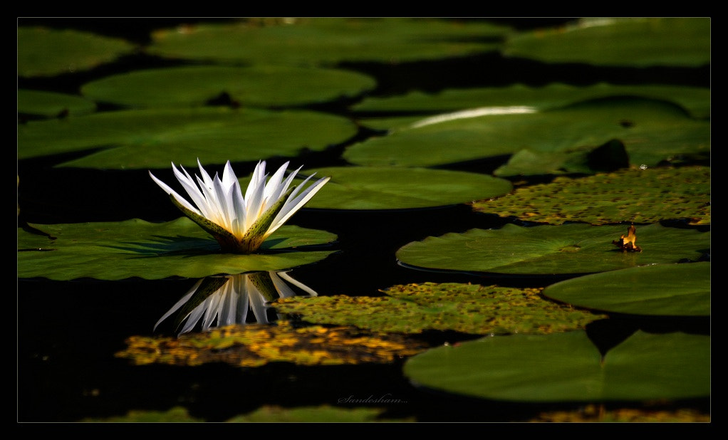 Photograph floating and floating by Sandesh nk on 500px