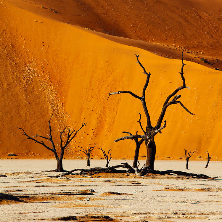 Photograph Fantastic realism of Namibia by Sam Dobson on 500px