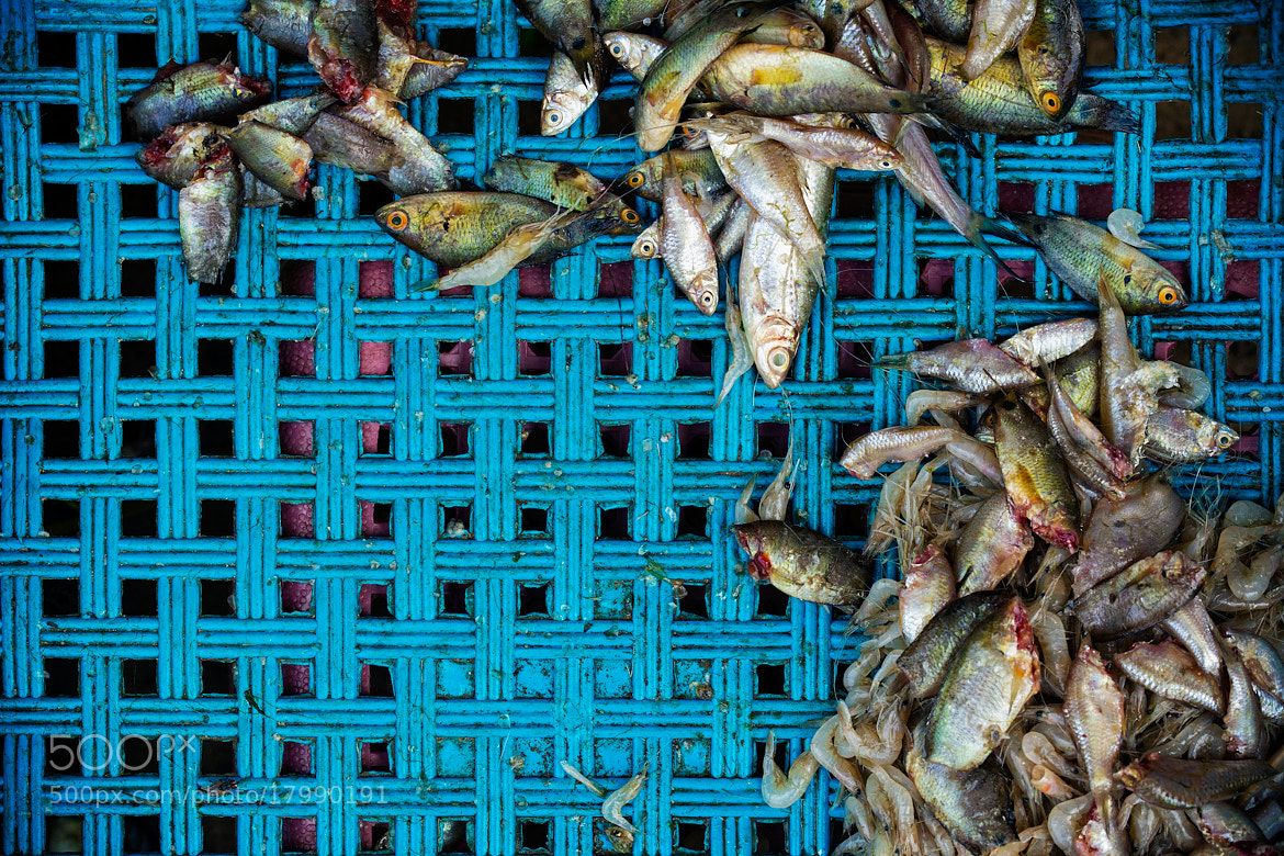 Photograph Market Fish by Nicole S. Young on 500px