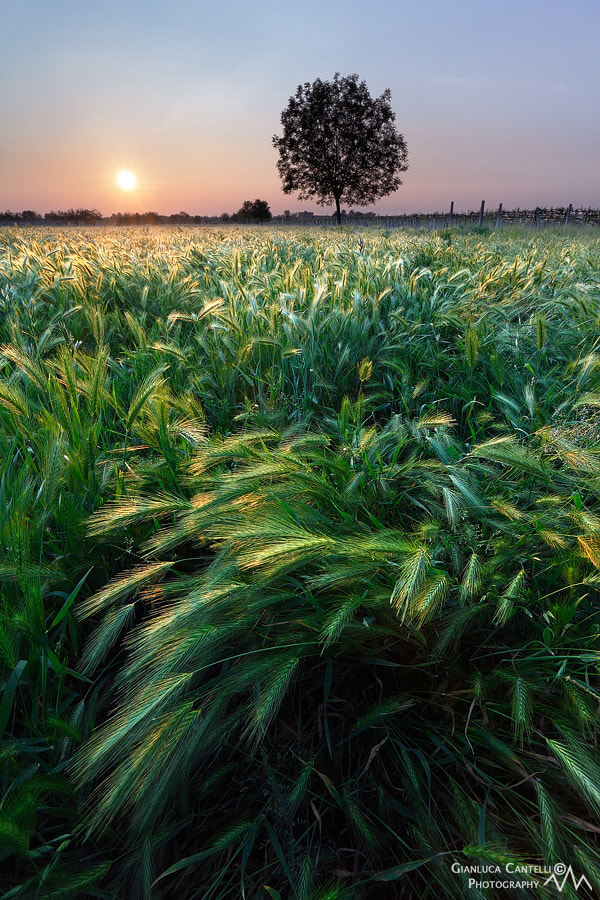 Photograph Sunset In Countrisyde by Gianluca Cantelli on 500px