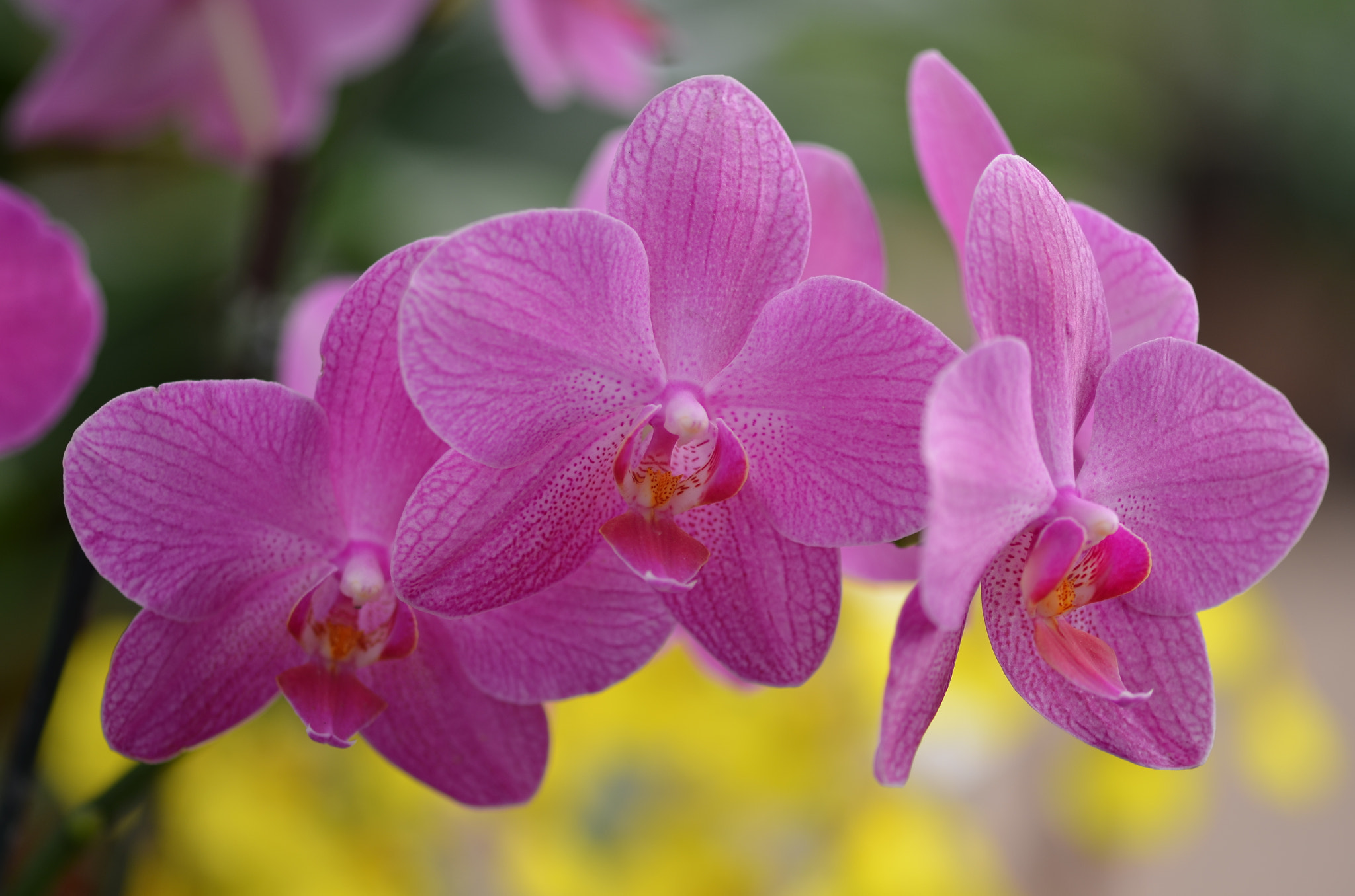 Photograph just Orchids. by Liora Levin on 500px