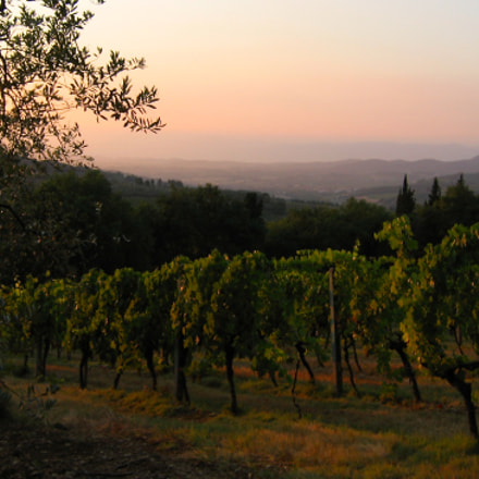 Golden sunset in Tuscany, Canon POWERSHOT A95