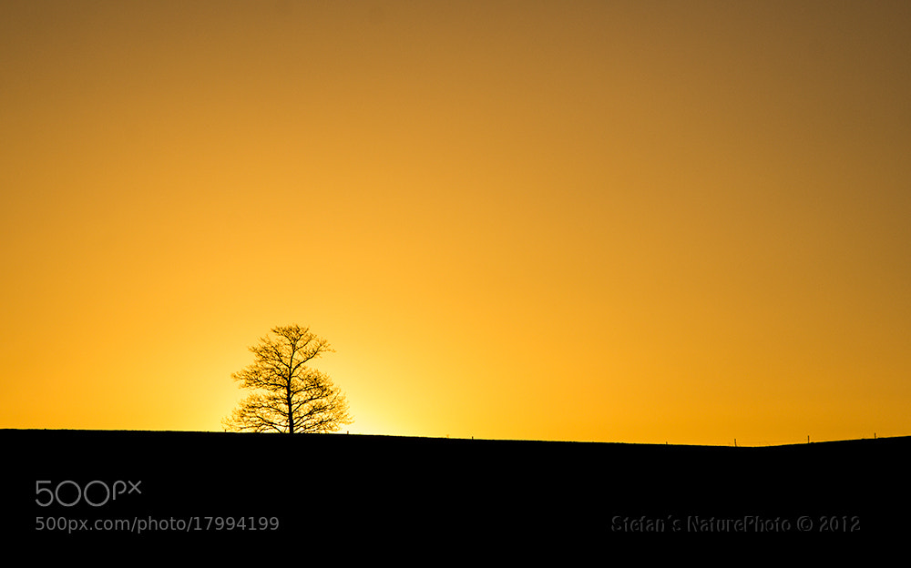 Photograph Stand alone by Stefan Gustavsson on 500px