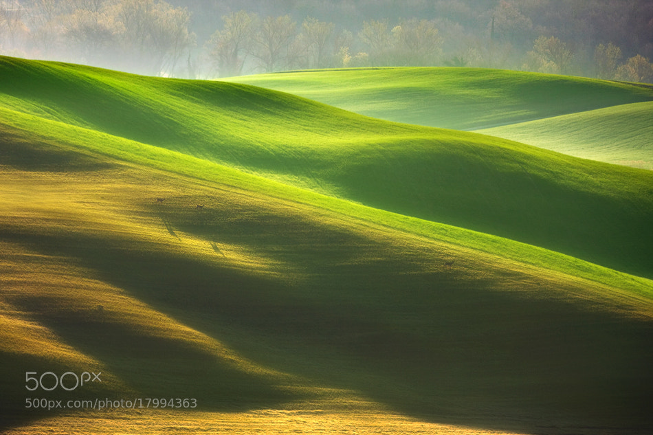 Photograph 3 on the carpet ... by Marcin Sobas on 500px