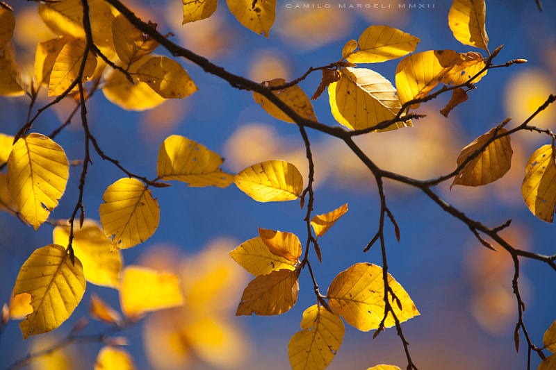 Photograph Autumn details (I) by Camilo Margelí on 500px