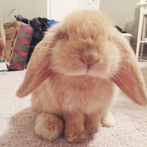 CUTEST Mr Rabbit