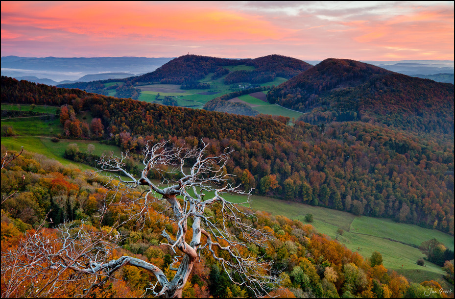 Photograph The old Tree by Jan Geerk on 500px