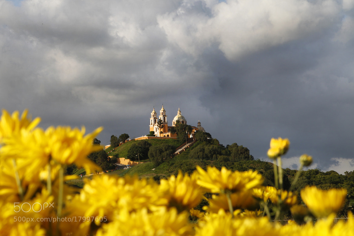 Photograph Flowers field and Church by Cristobal Garciaferro Rubio on 500px