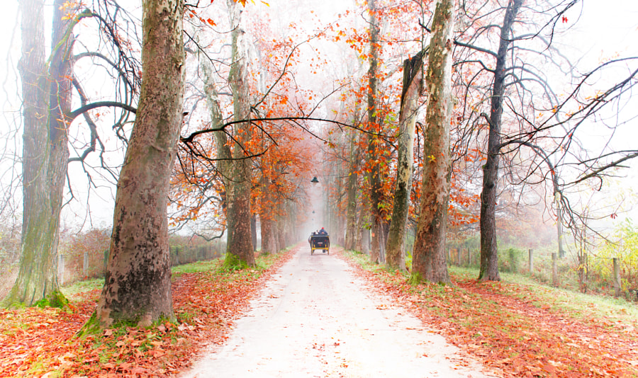 Morning on the Carriage Road by Mevludin Sejmenovic on 500px.com
