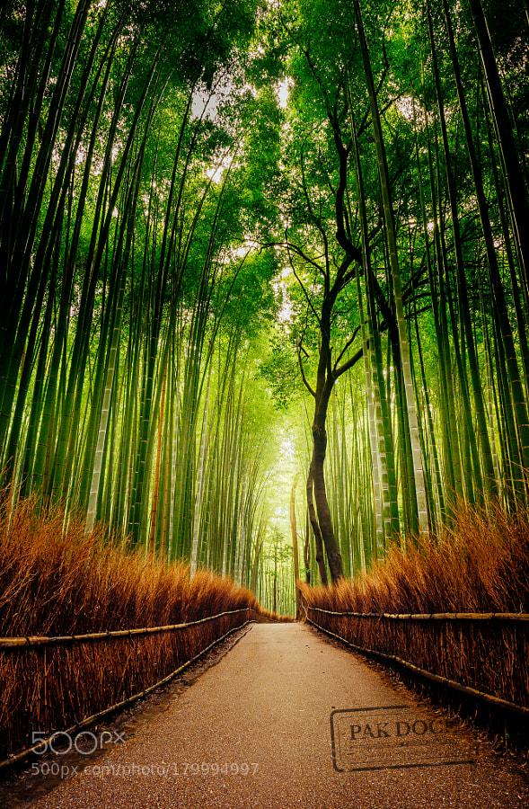 Empty Arashiyama