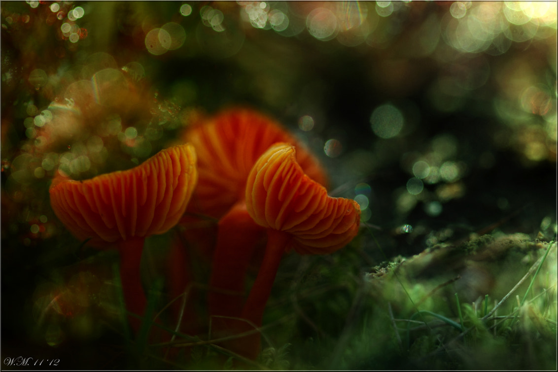 Photograph Poison cups... by Wil Mijer on 500px