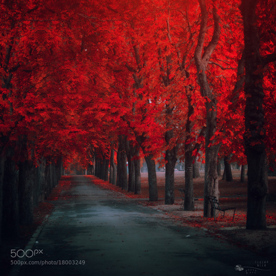 4 Season of fire by Ildiko Neer