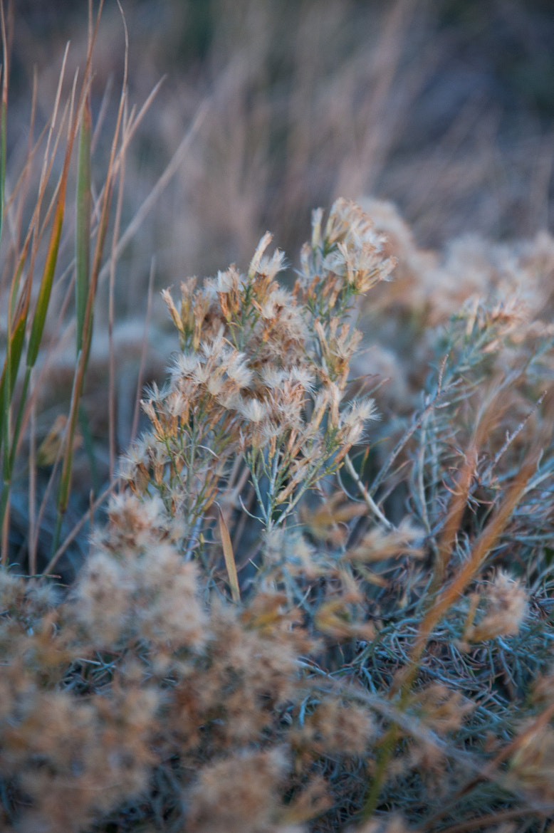 Photograph In the Wind by Katie Mobley on 500px