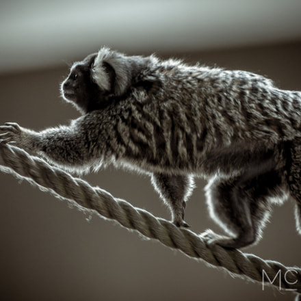 Rope Walking CT2A3508, Canon EOS 5D MARK III, Canon EF 500mm f/4.5L