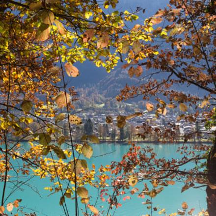 Autumn on lake of Brienz