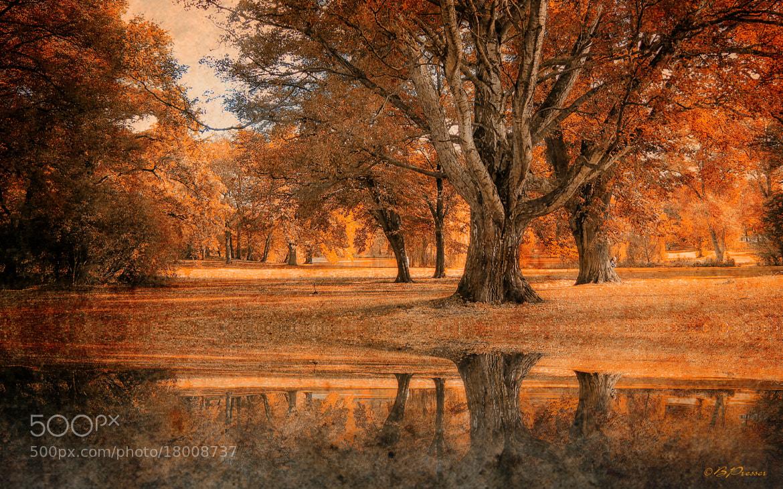 Photograph Im goldenen Park by Birgit Presser on 500px