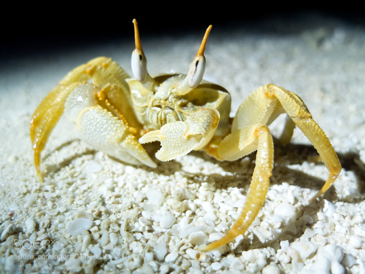 Photograph A little crab by Pavel Raykov on 500px