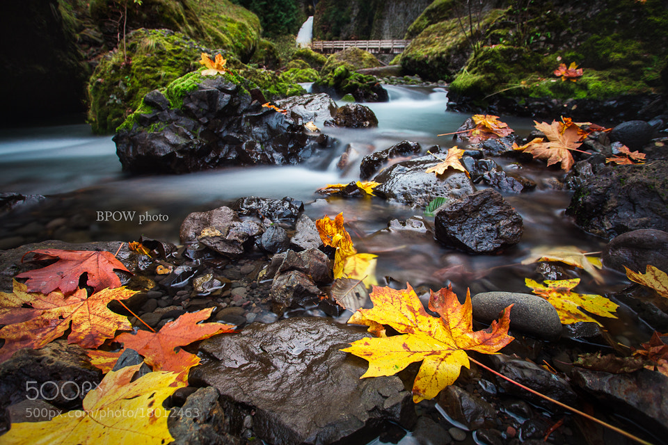 Photograph Oregon Fall by Brian Powers on 500px