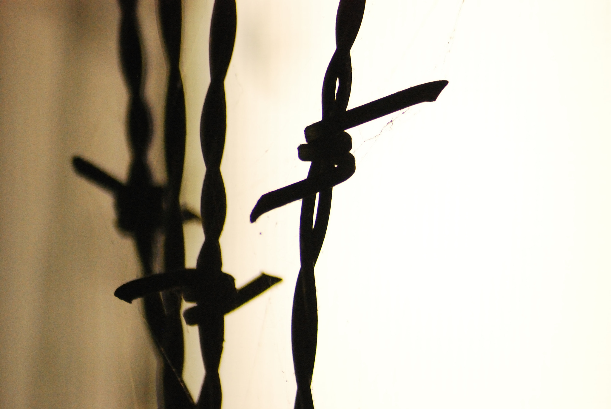 Photograph Barbwire by Anastasia Hill on 500px