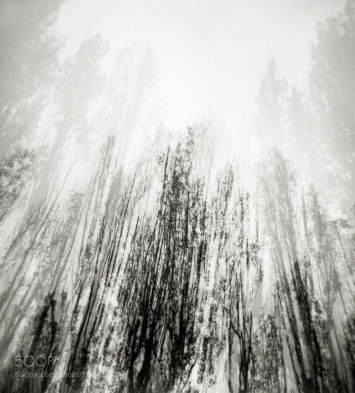 Photograph Poplars, Oregon by Austin Granger on 500px