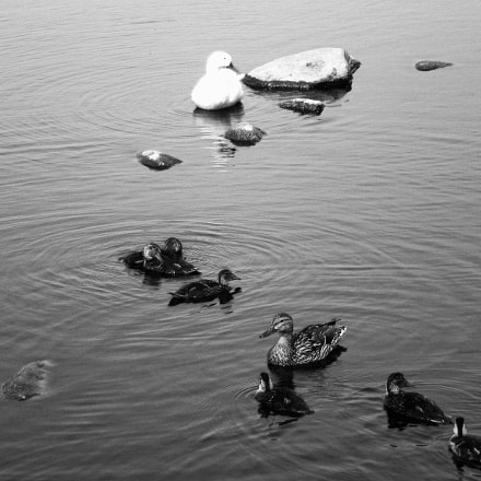 Patos..., Nikon COOLPIX L14