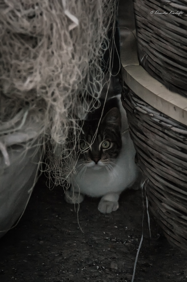 Photograph Cat in port by Dimitra Karlafti on 500px