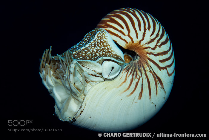 Photograph Nautilus by Charo Gertrudix on 500px