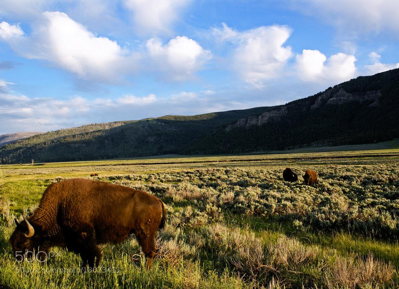 Photograph Home on the range by Dvir Barkay on 500px