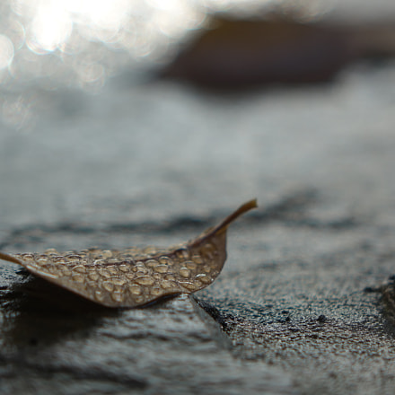 a leaf is going, Sony DSC-RX10, Sony 24-200mm F2.8