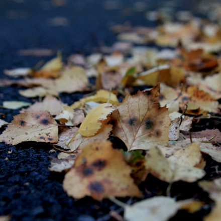 Fall on the asphalt, Canon EOS 1100D, Tamron AF 28-300mm f/3.5-6.3 XR LD Aspherical [IF] Macro